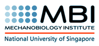 Mechanobiology Institute, National University of Singapore Retina Logo